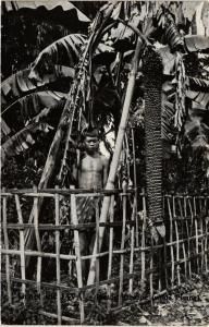 CPA Groet uit JAVA - Pisang Sareboe. Wilde Pisang. INDONESIA (a3020)