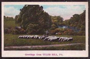 PA Tyler Hill Greetings From