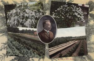 DENDEE , Illinois, 1914 ; D. Hill Nursery Co.