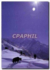 Postcard Modern Yaks Nepal Khumjung