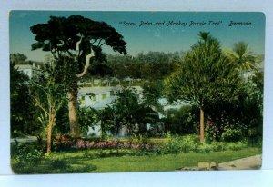 Bermuda Screw Palm And Monkey Puzzle Tree Vintage Postcard