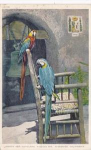 California Riverside Mission Inn Joseph and Napoleon Pte Macaws