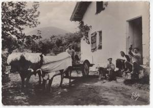 Social History, Rural Scene, Continental, With Ox Cart RP PPC, Biarritz 1938 PMK