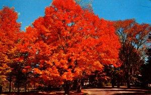 VT - Route 7 Autumn Foliage