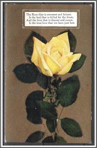 True Love Lost - White Rose - [MX-137]