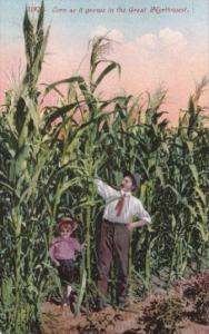 Giant Corn As It Grows In The Great Northwest