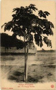 CPA AK CONGO Francais- Un Papayer femelle (86583)