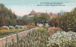 Beautiful Winter Scene,  Flower Beds and Snowbanks,  California,  00-10s