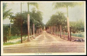 indonesia, BORNEO BALIKPAPAN, Street with Palm Trees (1920s)
