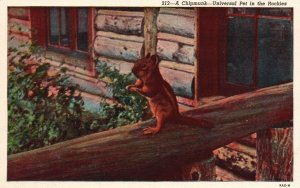 Colorado Rockies, CO, Chipmunk, Universal Pet, Linen Vintage Postcard g9380