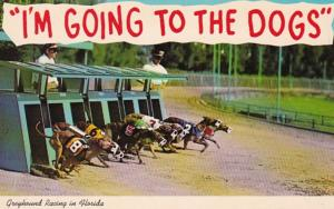 Greyhound Racing Greyhounds Breaking The Starting Box