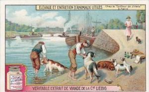 Liebig Trade Card S1176 Breeding Of Useful Animals No 6 Dog Breeding France