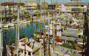 California San Francisco Fishing Fleet