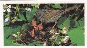 Grandee Vintage Cigarette Card Britains Wayside Wildllife No 8 Hedge Sparrow