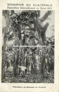 guatemala, C.A., VIRGINIA, Banana Plantation (1913) Exposition Expo Gand