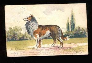 021513 Nice COLLIE. Vintage HAND MADE Water color PC