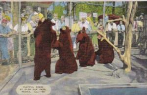 Illinois Peoria Playful Bears At Glen Oak Park