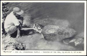 Miami, Florida, Myrtle Loggerhead TURTLE Tortoise, Theatre of the Sea 50s RPPC