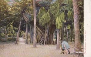 Florida Palm Beach Man Sitting Under Banyan Tree