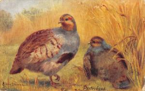 Eileen Drummond~Partridges in Golden Wheat~British Game Birds~TUCK Oilette 1910
