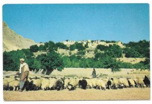 Afghanistan Shepherd Sheep Village near Kabul Vntg Postcard