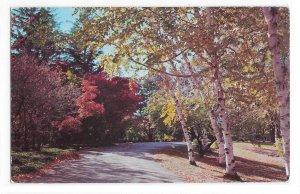Winding Road Autumn Woods Dexter Beauty Scene No 25 Nature Vintage 50s Postcard