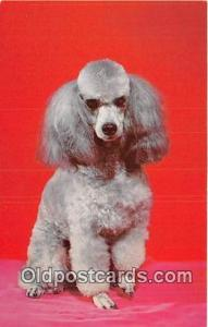 French Poodle Color by Scenic Art, Berkely, CA, USA Postcard Post Card Color ...