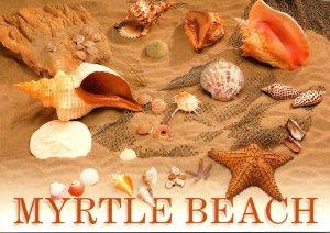 South Carolina Myrtle Beach Sea Shells