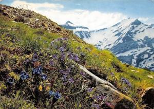 Switzerland Bergfruhling Oldenhorn Rouge Flowers Mountains
