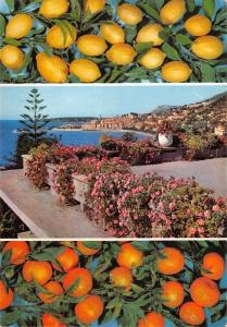 BR54968 Menton les fruits d or france