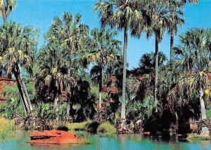 Australia Palm Valley The Finke River