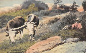 Leisure Moments Cow 1912 Missing Stamp