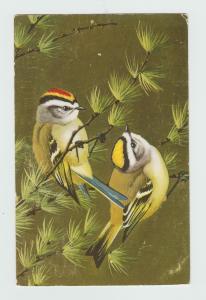 COLORFUL BIRDS POSTCARD ART VINTAGE GOLDEN-CROWNED KINGLET