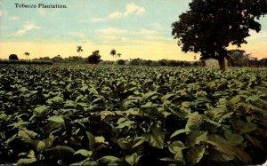 Typical Tobacco Plantation Curteich