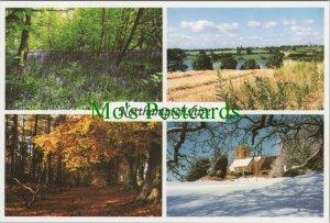 Northamptonshire Postcard - Badby Woods, Harlestone Firs, Holdenby..  RR11133