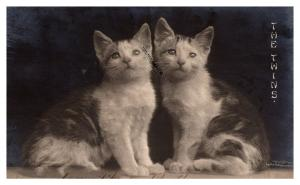CATS  , The Twins , RPC