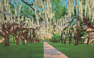 Postcard De La Ronde Oaks Versailles Plantation near New-Orleans Louisiana
