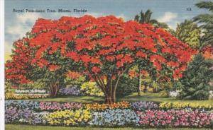 Royal Poinciana Tree Miami Florida