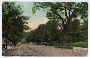 Waltham, Mass, Historic Tree, Main Street