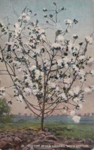 Flowers Cotton Stalk Loaded With Cotton 1920 Curteich