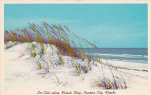 Florida Panama City Beach Sea Oates and Sand Dunes Along Miracle Strip