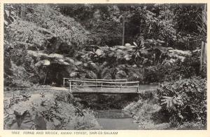 German East Africa Tanzania Dar-Es-Salaam, Amani Forest, Tree Ferns and Bridge