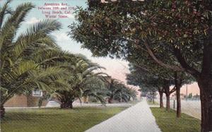 California Long Beach American Avenue Between 10th And 11th Winter Scene 1910