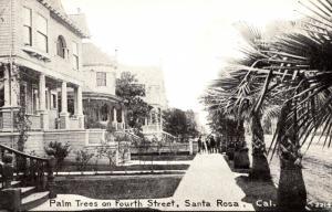 California Santa Rosa Palm Trees On Fourth Street
