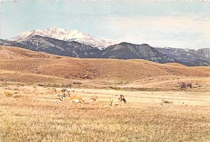 Home on the Range - Rocky Mountains