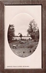 SHEEP~STRAYED FROM YONDER MEADOWS-ROTARY OVAL WINDOW REAL PHOTO POSTCARD