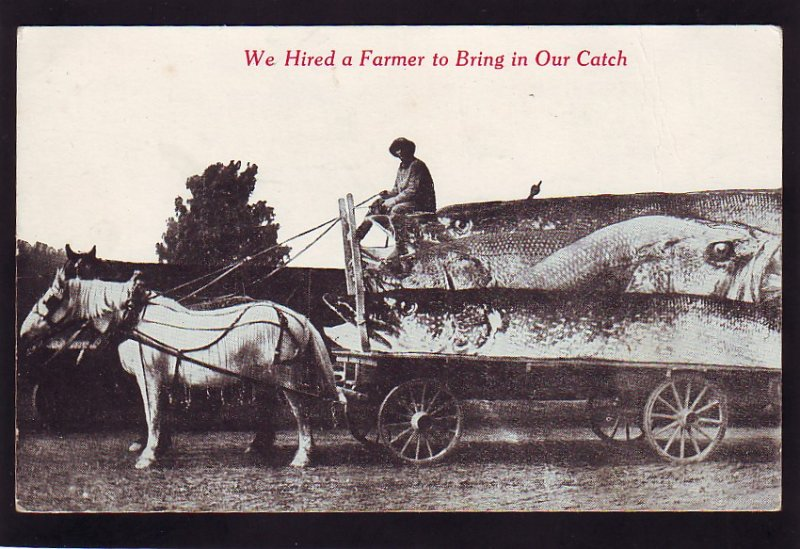 P1598 old postcard horse & wagon we hired a farmer to bring in the catch