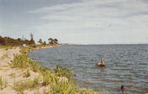 Greetings from Ocean City, Maryland, unused Postcard