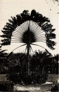 Singapore Postcard Traveling Tree Malaya (a1400)