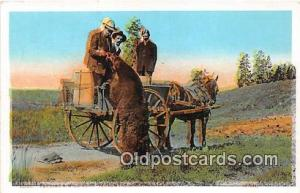 Wild Bear Yellowstone National Park Postcard Post Card Yellowstone National P...